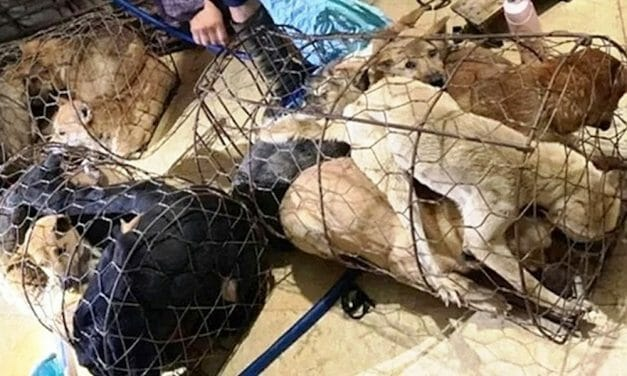 SIGN: Justice for Hundreds of Dogs Stolen for Slaughter by Dog Meat Gang
