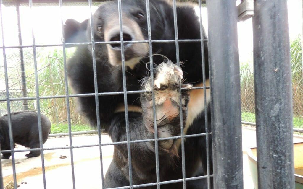 "Update: Virginia Judge Decrees Roadside Zoo ""Cruelly Treated"" Exotic Animals"