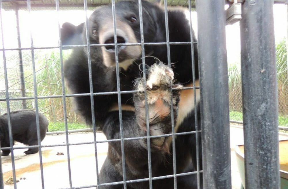 Bear at Wilson's zoo
