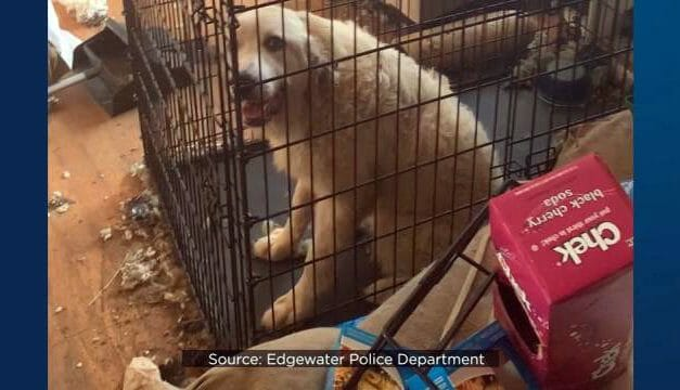 SIGN: Justice for 245 Animals Forced to Live in Piles of Rotting Trash