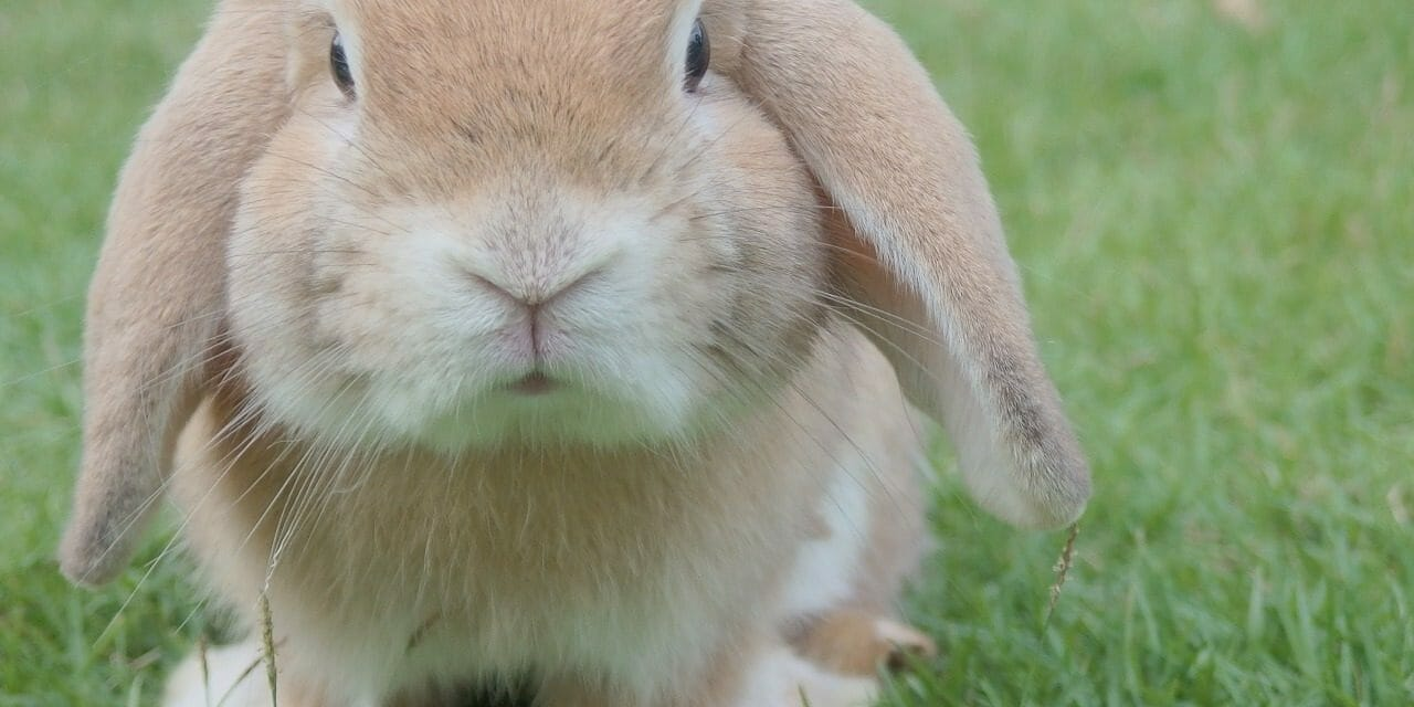 This New Browser Extension Helps You Shop Cruelty-Free on Amazon