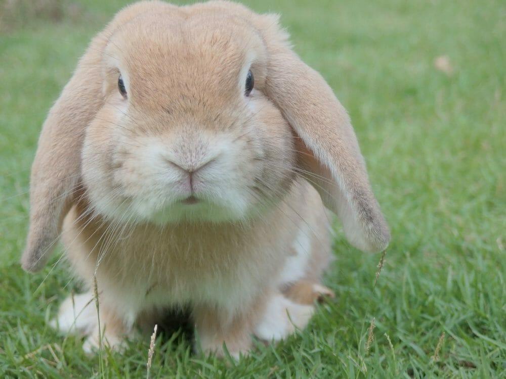 cute bunny on grass