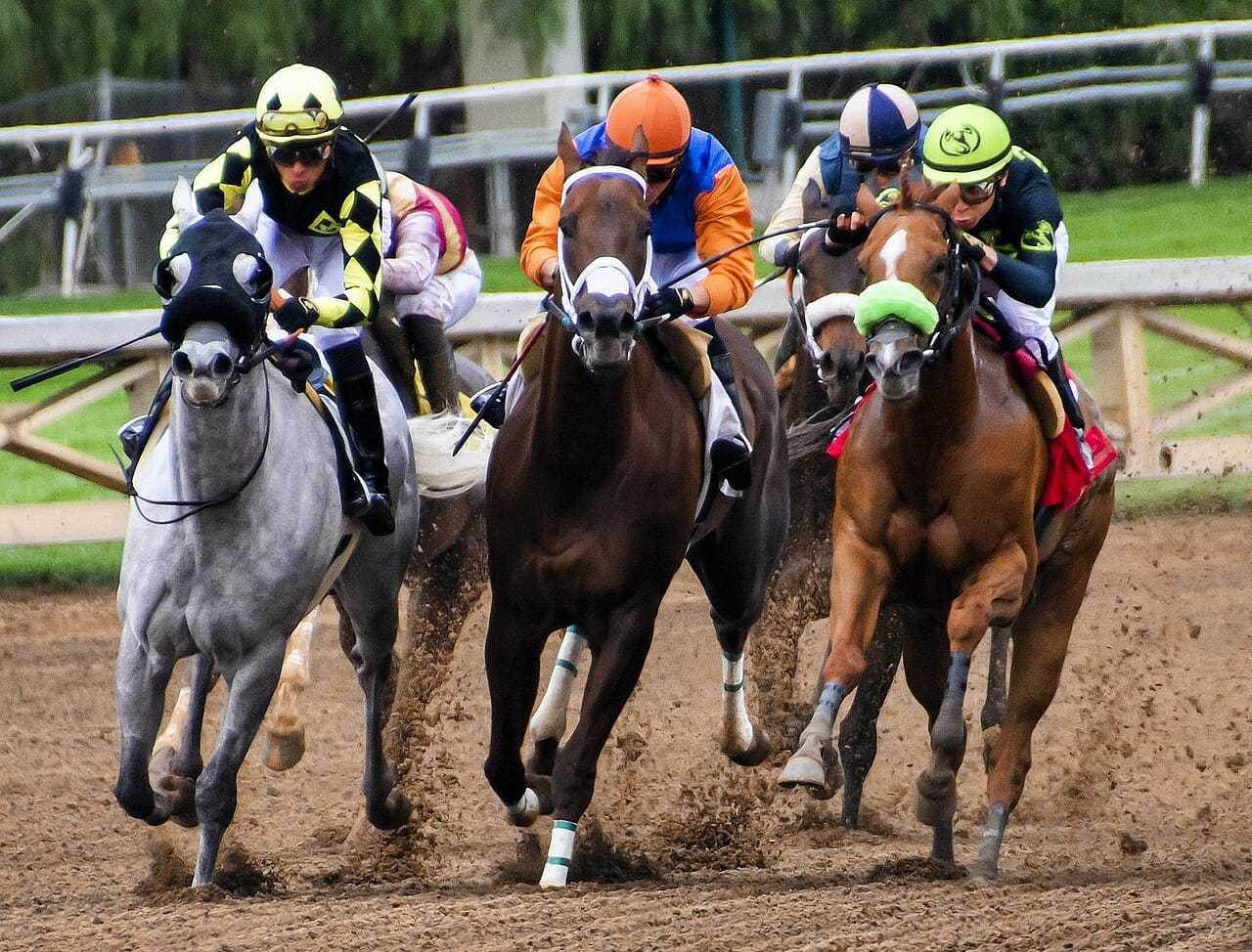 four horses forced to race
