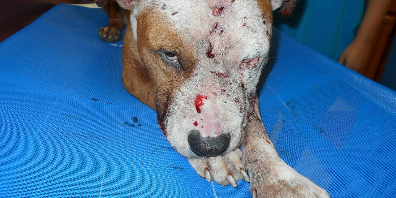 SIGN: Justice for Bleeding, Wounded 'Bait Dog' Dumped in Ditch to Die