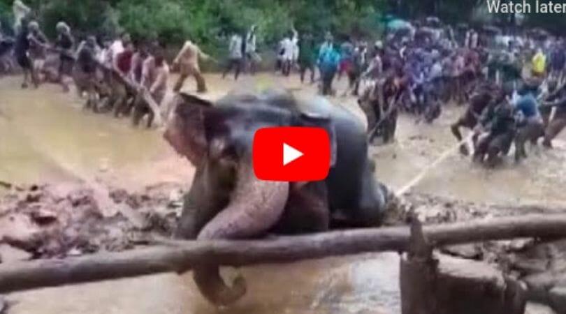 elephant well