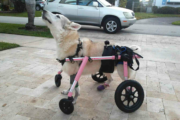 SIGN: Justice for Zorra, Disabled Dog Kidnapped and Left to Die