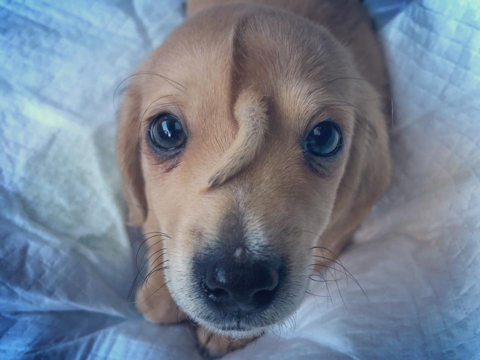 Puppy with 'head tail'