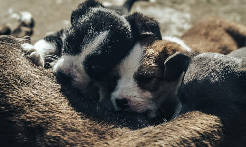 SIGN: Justice for Dog Found Chained to Post While Nursing 6 Newborn Puppies