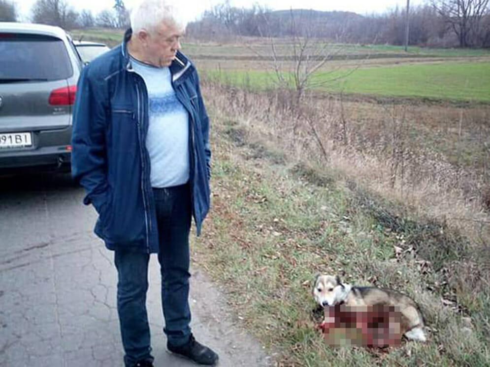 dog dragged car