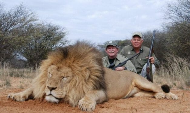 Your Voice Could Help End UK Trophy Hunting