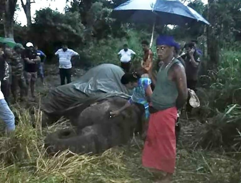 SIGN: Justice for Kanakota, Elephant Who Died of Exhaustion from Giving Tourist Rides