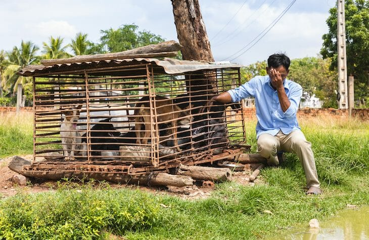 This Former Dog Butcher Is Turning Into a Rice Farmer, Thanks to Animal Activists