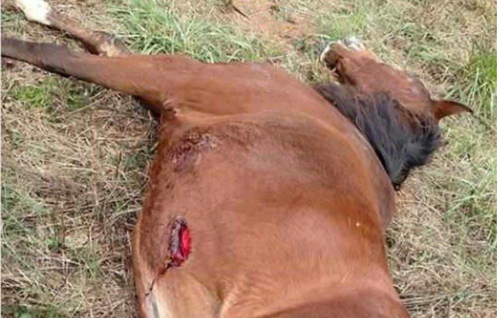 SIGN: Stop Serial Horse Stabber Slashing Innocent Animals in the Carolinas