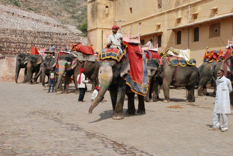 Elephant rides tourism Jaipur