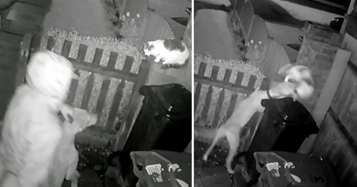 SIGN: Justice for Cat Gruesomely Mauled to Death at Man's Command