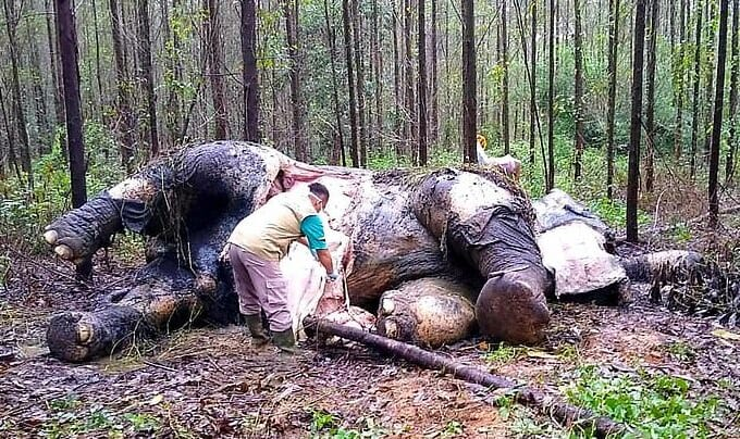 SIGN: Justice for Sumatran Elephant Brutally Decapitated, Tusks Hacked Off By Poachers