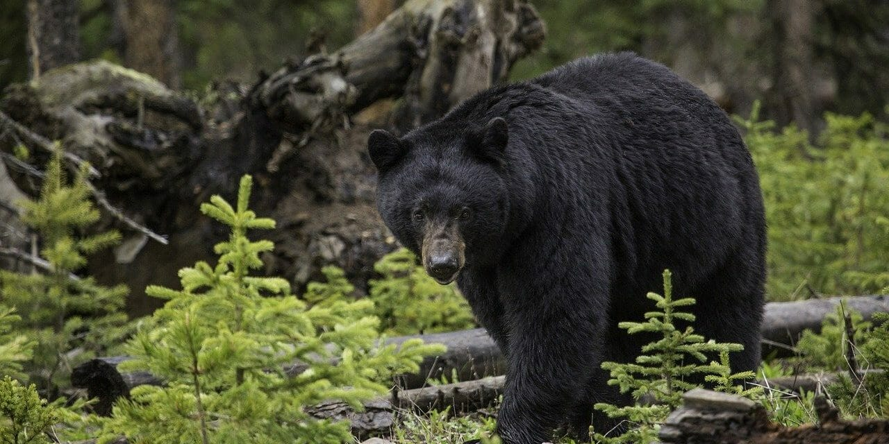 The Bear Protection Act Needs Your Support