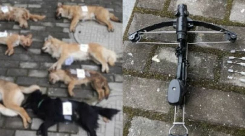 SIGN: Justice for 8 Dogs Shot with Poison Arrows by Dog Meat Seller