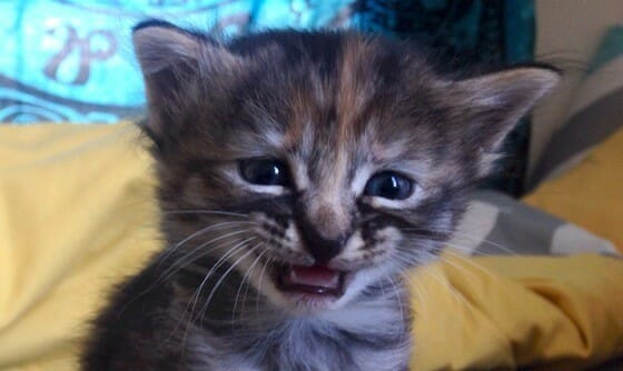SIGN: Justice for Kittens Bound with Duct Tape and Dumped in Garbage Chute