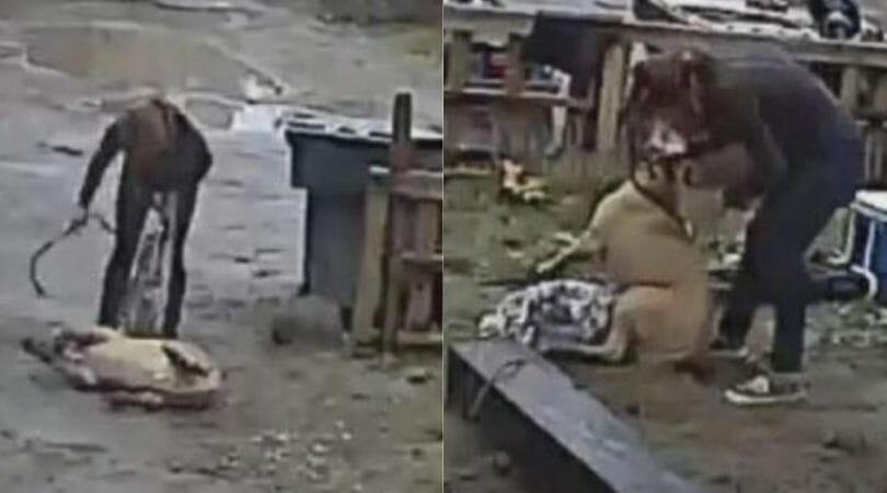 SIGN: Justice for Puppy Kicked, Beaten and Bitten On Camera