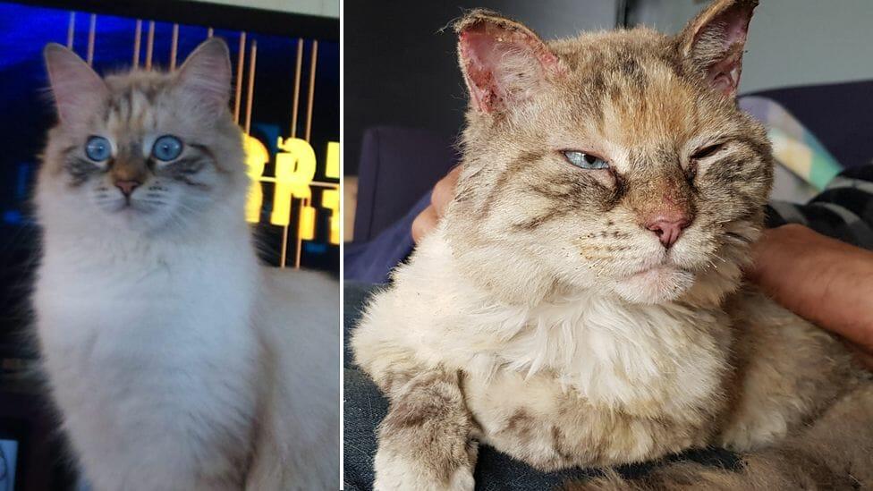 Family Overjoyed by Return of Missing Cat Lost During Australian Bushfires