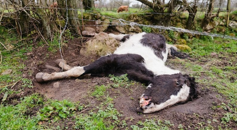 SIGN: Justice for 30 Horses Left To Wither Away to Skeletons