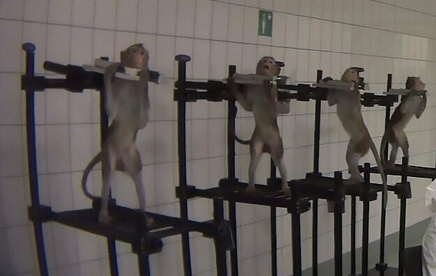 Judge Orders Cruel German Research Lab to Give Up All Animals