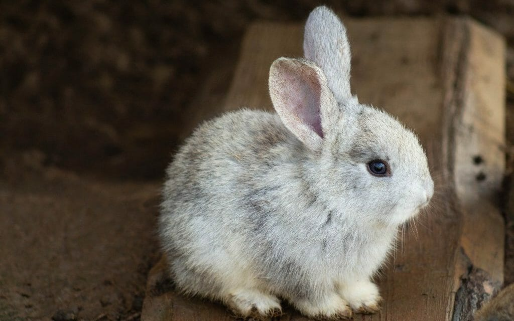 California Becomes The First State in the US To Ban Animal Cosmetics Testing