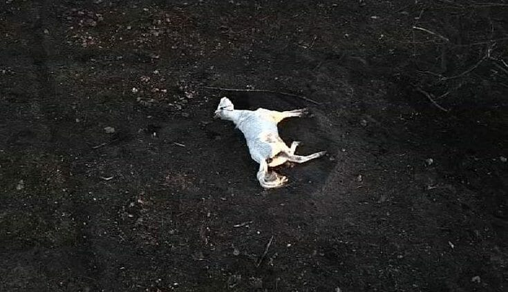 starved horse