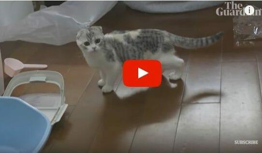 Rescued cat Wuhan