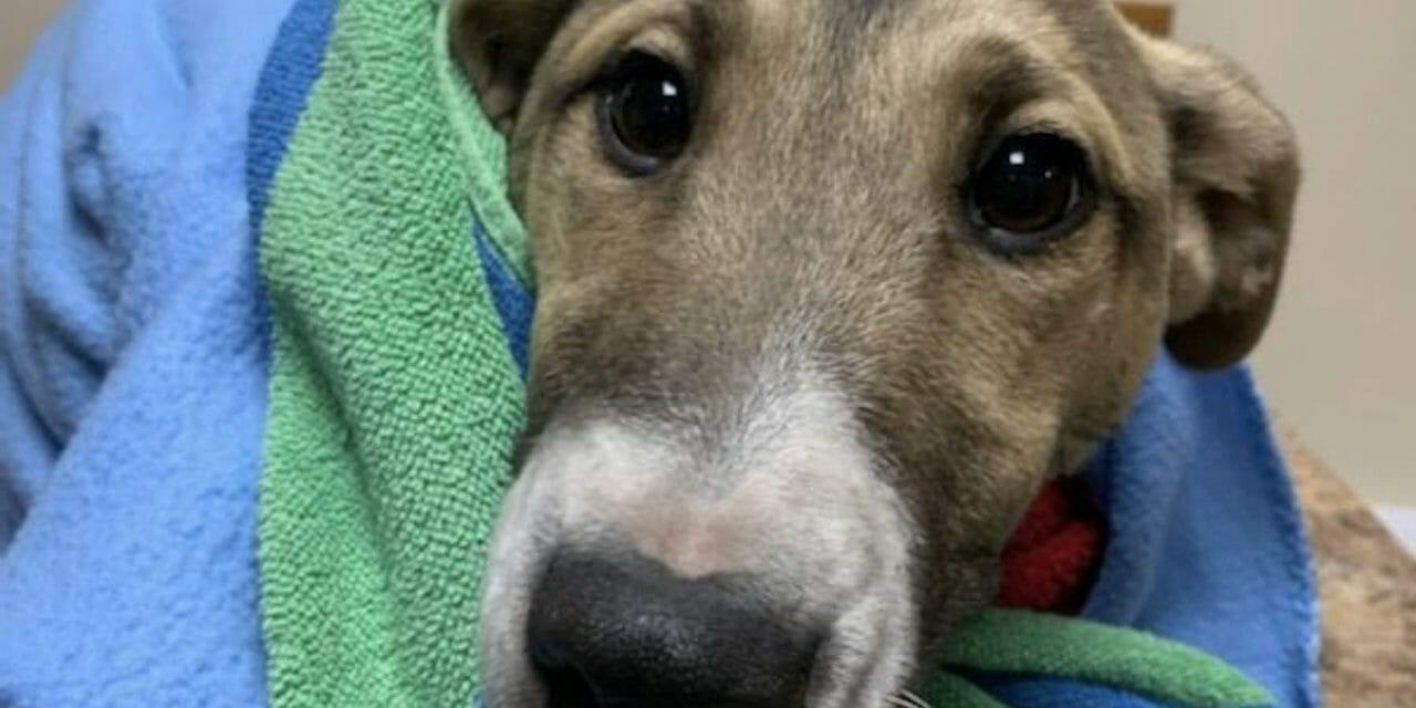 SIGN: Justice for Dog Brutally Stabbed 15 Times