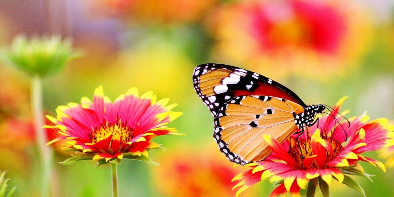 7 Fun Ways to Celebrate Plant a Flower Day