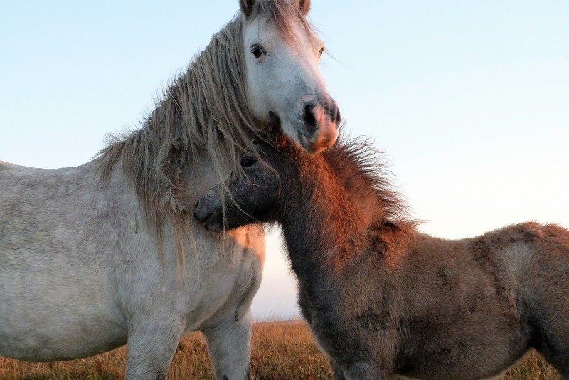US House Holds Landmark Hearing on Bill to Ban Horse Slaughter