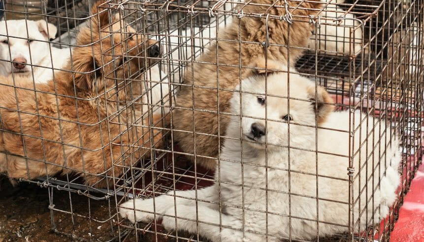 SIGN: I Support Shenzhen's Proposed Dog and Cat Meat Ban