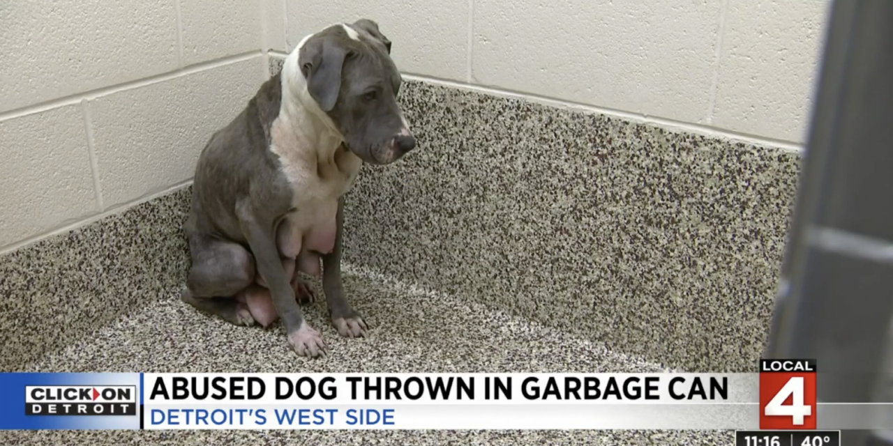 SIGN: Justice for Pit Bull Mother Dumped in Garbage Can After Giving Birth