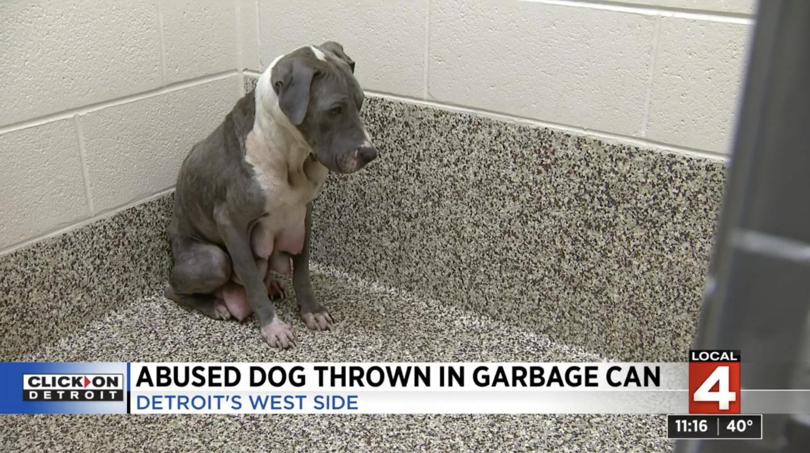 sad pregnant dog