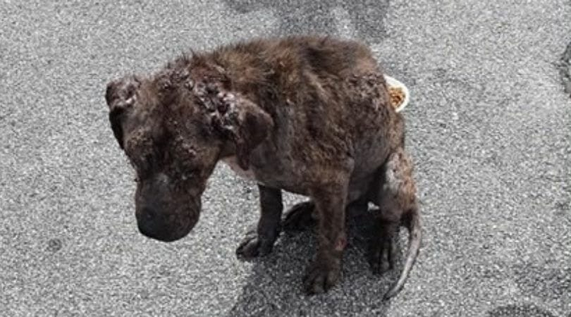 SIGN: Justice for Sick, Starving Dog Abandoned in Parking Lot