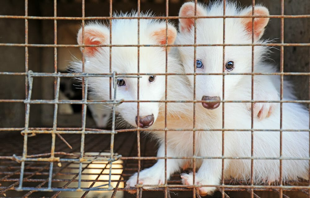 SIGN: Stop China's Deadly and Illegal Wildlife Trade from Continuing Online