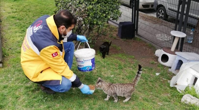 Turkey Issues Order to Feed Stray Animals So They Don't Starve in Pandemic