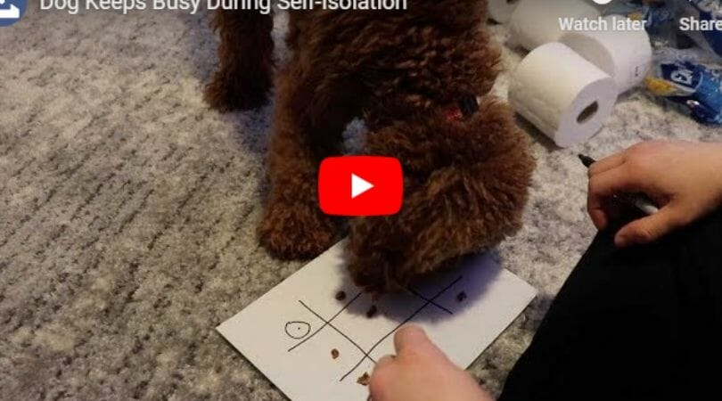 dog playing tic-tac-toe