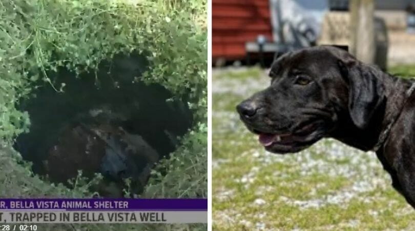SIGN: Justice for Dog Brutally Shot and Dumped in Well