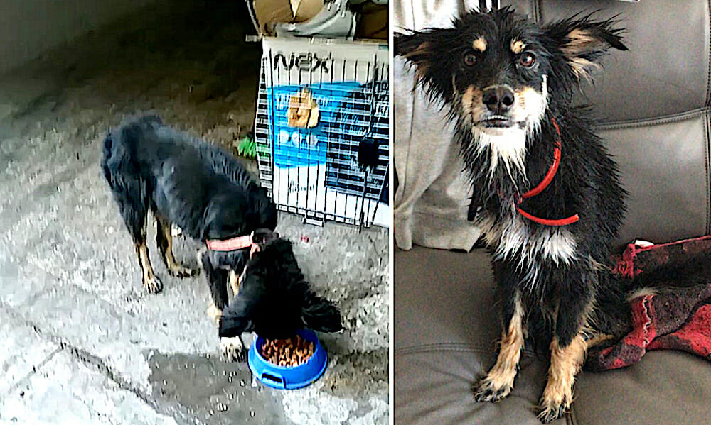 SIGN: Justice for Puppy Fed Rat Poison and Dumped in Trash