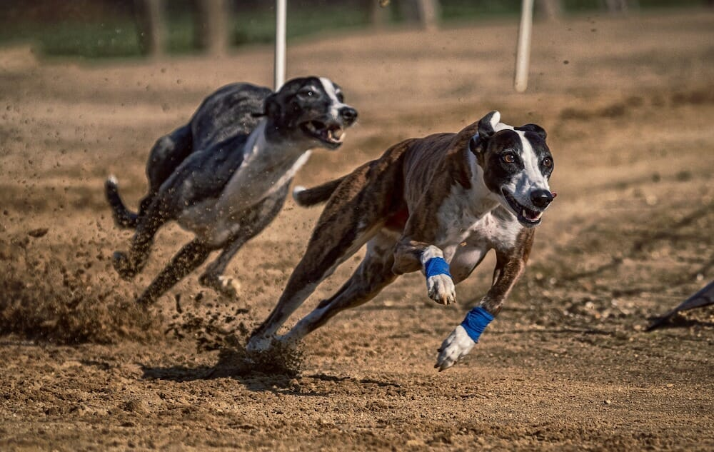 Alabama's Last Greyhound Racing Track Closes Its Doors