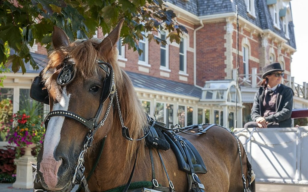 Chicago Officially Bans Horse-Drawn Carriages