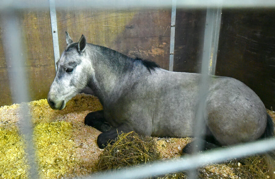 SIGN: Justice for Ponies Tied Up and Sexually Assaulted