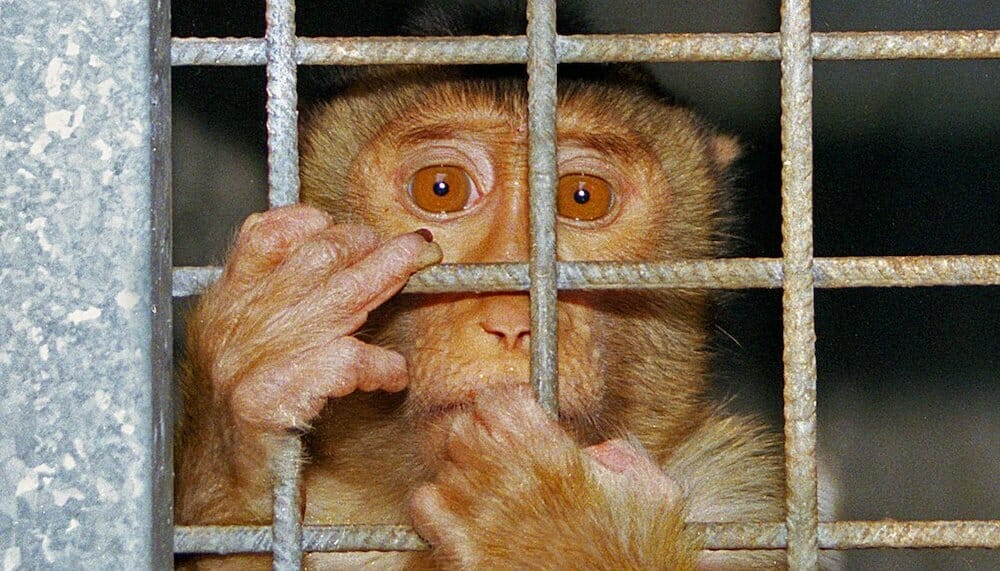 SIGN: Justice for Monkey Trapped in Cage and Set on Fire in Sickening Video