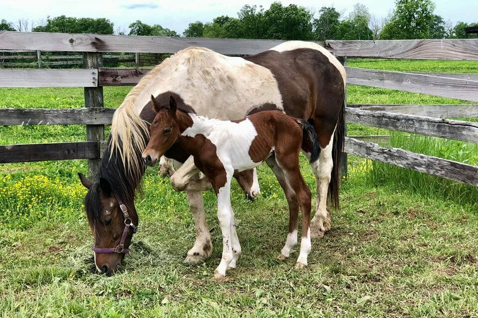 UPDATE: Pregnant Mare Who Survived Horse Massacre Gives Birth to Healthy Foal