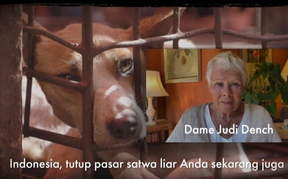 Video shot: Dog Meat Free Indonesia