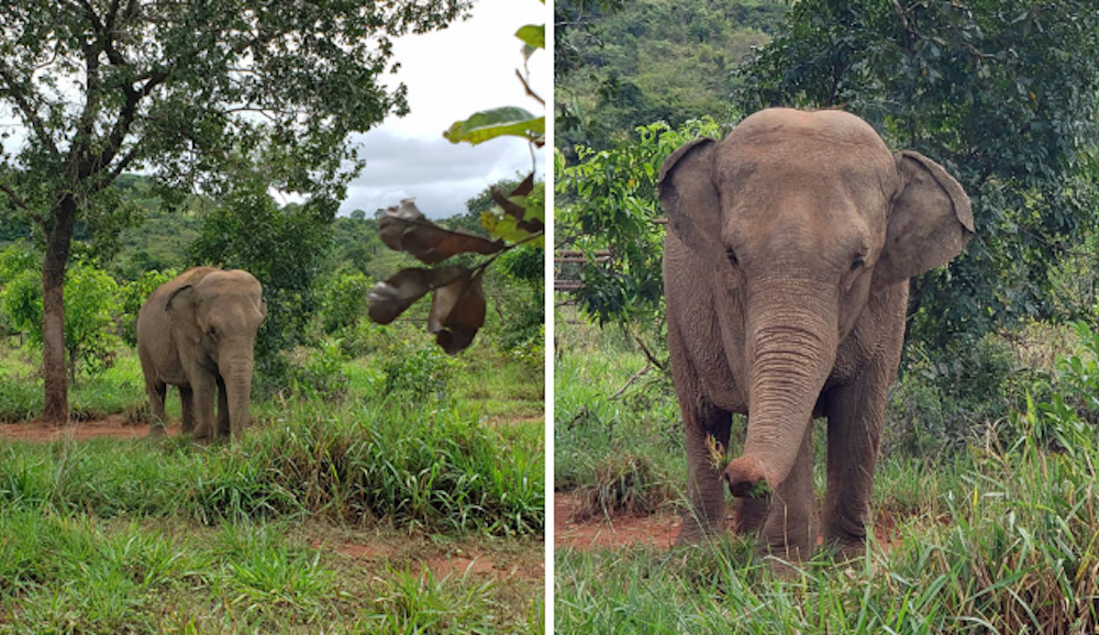 Mara the Elephant Leaves Zoo Life Behind to Start Fresh in Brazilian Sanctuary