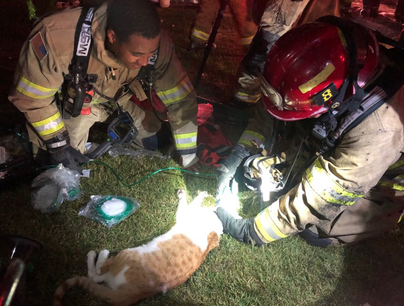 Firefighters Save Unconscious Cat from Burning Garage with Special Oxygen Mask